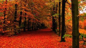 ---autumn-leaves-wallpapers-2277