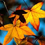 ---autumn-leaves-wallpapers-2281