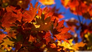 ---autumn-leaves-wallpapers-2282
