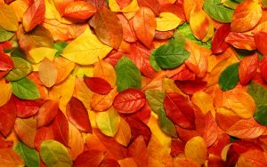 ---autumn-leaves-wallpapers-2283