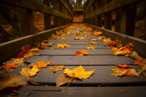 ---autumn-leaves-wallpapers-2284