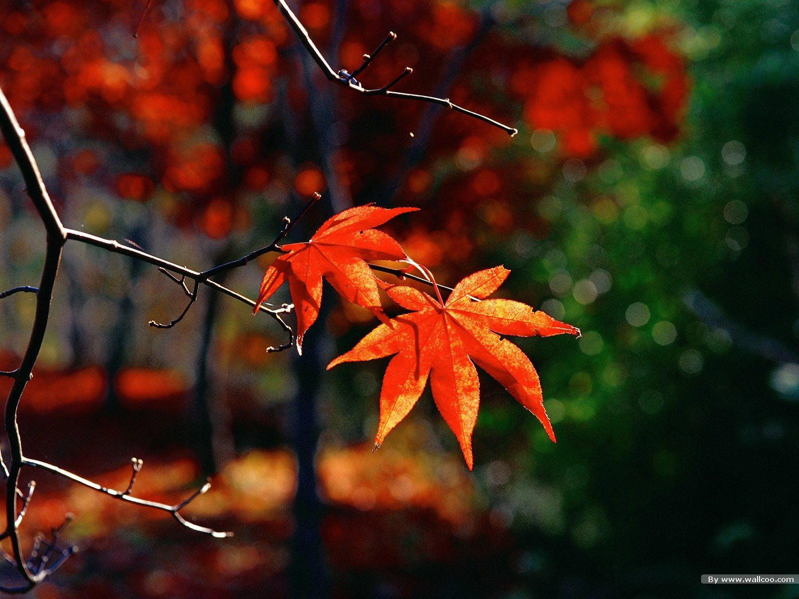 autumn leaves wallpapers 2285 Wall Paper