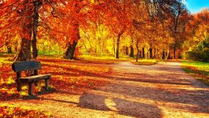 ---autumn-leaves-wallpapers-2286