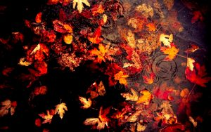 ---autumn-leaves-wallpapers-2289
