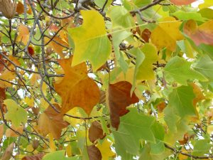 ---autumn-leaves-wallpapers-6780