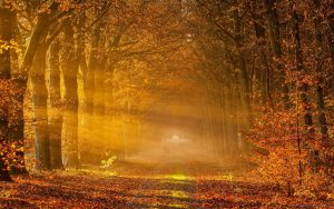 ---autumn-morning-pictures-6782