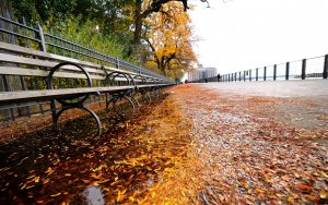 ---autumn-new-york-6783