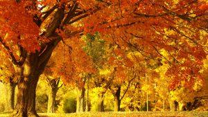---autumn-park--13387