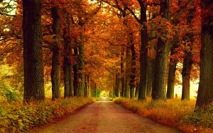 ---autumn-park-alley-13388