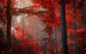 ---autumn-red-forest-13390