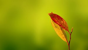 ---autumn-red-leaves-6784