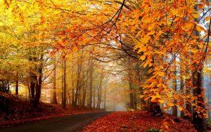 ---autumn-road-6785