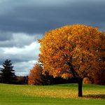 ---autumn-tree-background-6786