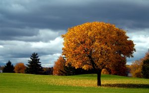 ---autumn-tree-background-6786