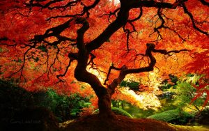 ---autumn-tree-wallpaper-6787