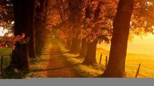 ---autumn-wallpapers-704