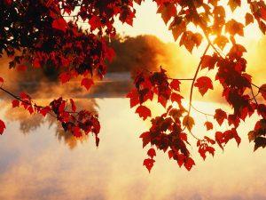 ---autumn-wallpapers-707