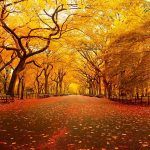 ---autumn-wallpapers-708