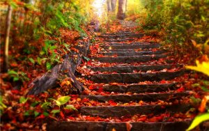 ---autumn-wallpapers-709