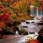 ---autumn-wallpapers-710