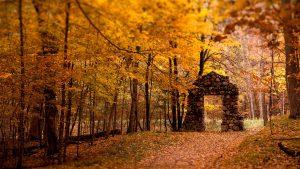 ---autumn-wallpapers-711