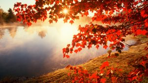 ---autumn-wallpapers-713