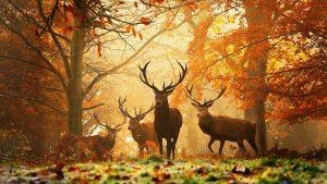---autumn-wallpapers-716
