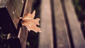 ---bench-leaf-autumn-7210