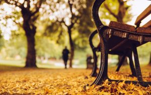---bench-trees-park-leaves-yellow-autumn-nature-2559