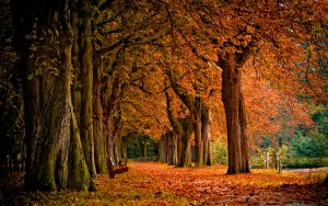 ---burning-autumn-2825