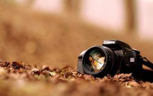 ---canon-eos-d-hi-tech-autumn-nature-dry-leaves-photo-7567