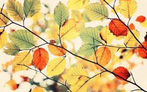 ---colorful-autumn-leaves-nature-7842