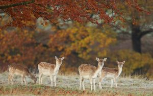 ---deers-nature-trees-autumn-photo-3368