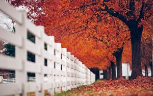 ---fence-white-trees-leaves-autumn-nature-3721