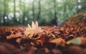 ---forest-leaves-fallen-fall-leaf-oak-autumn-nature-8889