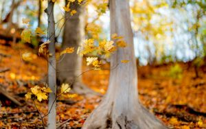 ---forest-trees-branches-leaves-yellow-nature-fall-autumn-8907