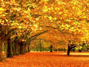 ---free-autumn-wallpaper-8962