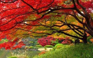 ---japanese-garen-autumn-327