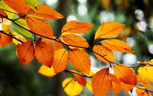 ---leaves-orange-yellow-branch-tree-fall-autumn-nature-10102