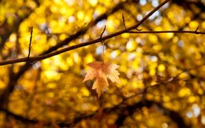 ---macro-leaf-leaves-yellow-autumn-branches-10355
