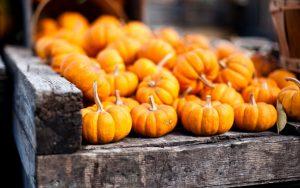 ---pumpkins-orange-autumn-16303