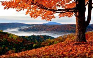 ---red-autumn-11518