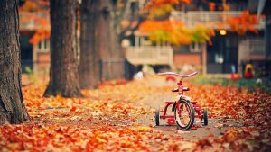 ---tricycle-trees-fallen-leaves-autumn-photo-5897