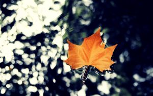 ---water-leaf-autumn-nature-17154