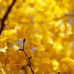 ---yellow-autumn-twig-17262
