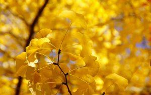 ---yellow-autumn-twig-17262