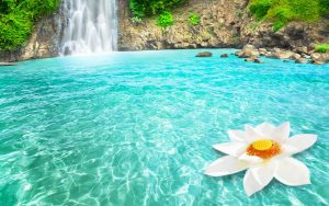 ---flower-and-waterfall-wallpaper-14801