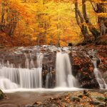 ---forest-waterfall-wallpaper-8914