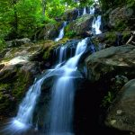 ---forest-waterfall-wallpaper-8915