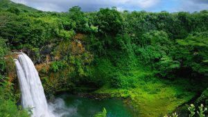 ---forest-waterfall-wallpapers-14874